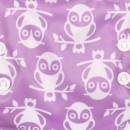 Owlbert
